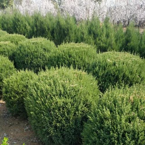 说说防止植物虫害的检查方法有哪些