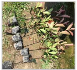 家里种的盆栽花卉幼苗不好怎么办?