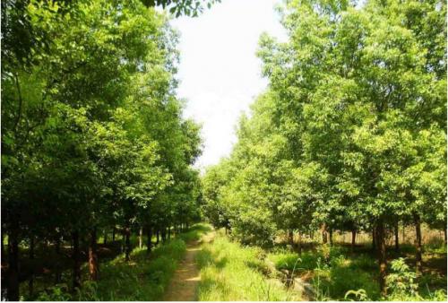 花卉苗木种植供应介绍园林苗木的分类有哪些