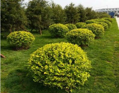 天气转冷快您知道该放置哪些盆栽么?花卉盆栽苗木种植