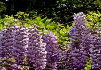 可能这些知识花卉苗木种植基地不会告诉你
