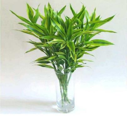 花卉盆栽苗木种植带领发展潮流