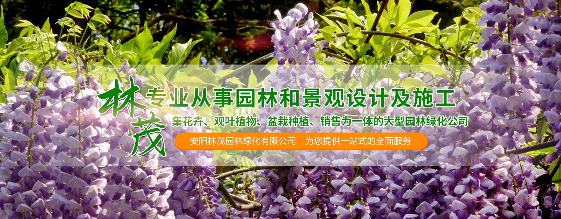 花卉盆栽苗木种植