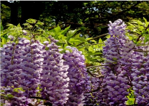 花卉苗木种植基地