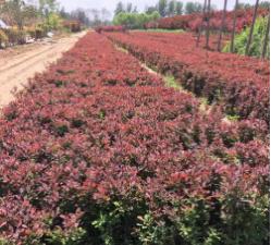 花卉苗木种植供应
